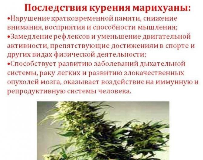 Гашиш: опасность наркотика, передозировка и стадии зависимости