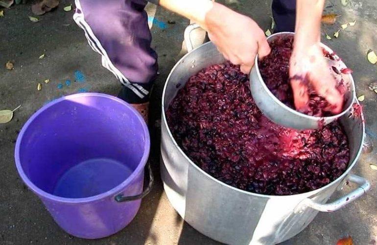 Домашнее вино из винограда: классический пошаговый рецепт