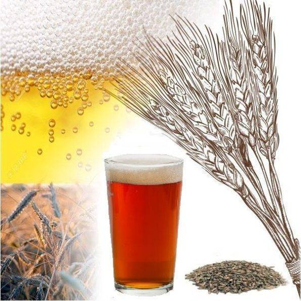 Рецепт приготовления домашнего пива из хлеба (хлебного пива)