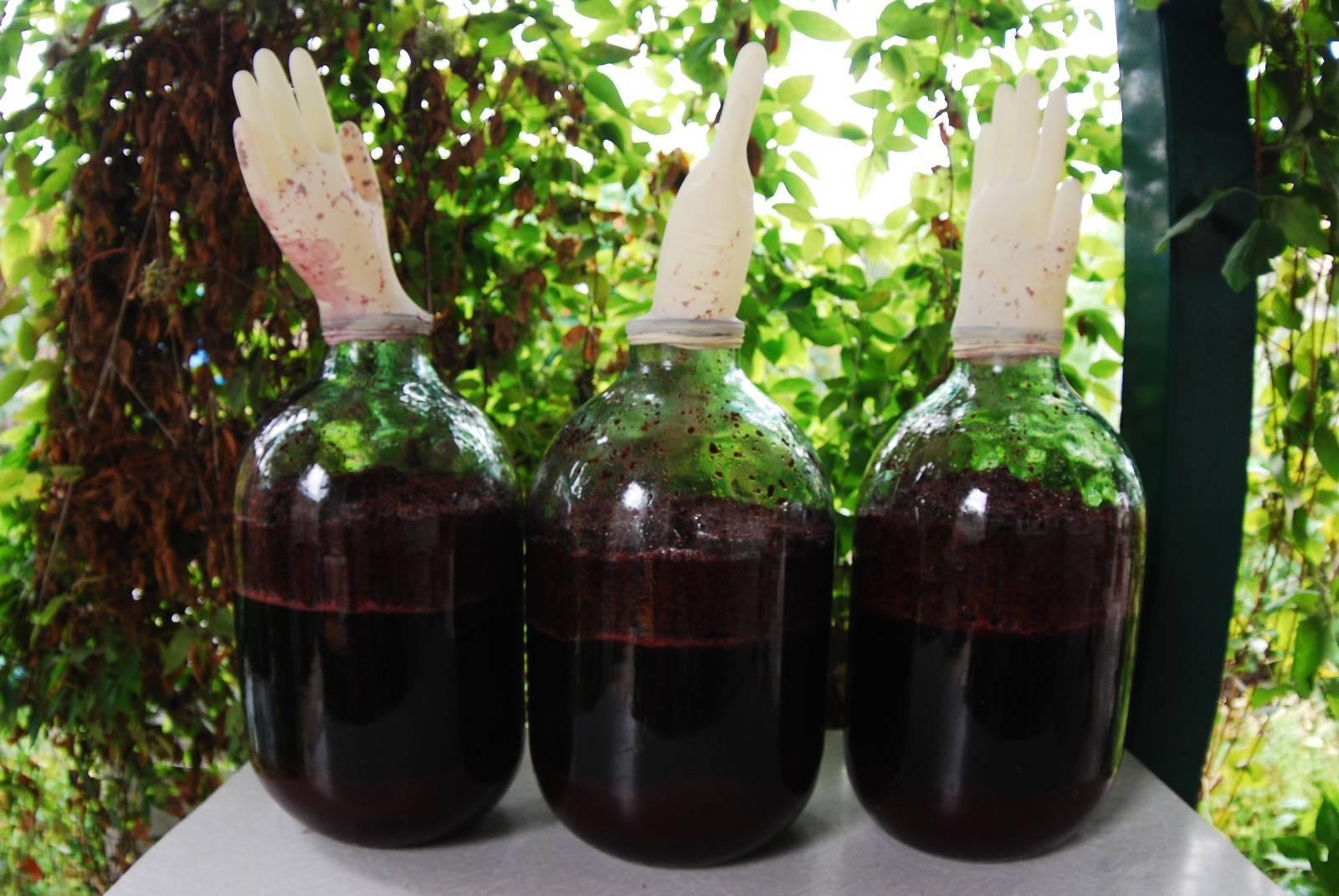 Как организовать бизнес по производству домашнего вина