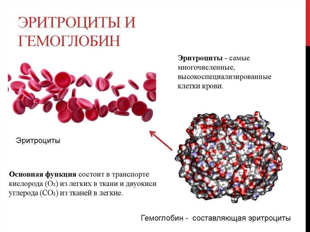Влияние алкоголя на уровень гемоглобина крови