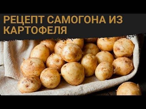 Самогон из картофеля – лучшие рецепты от наших дедушек