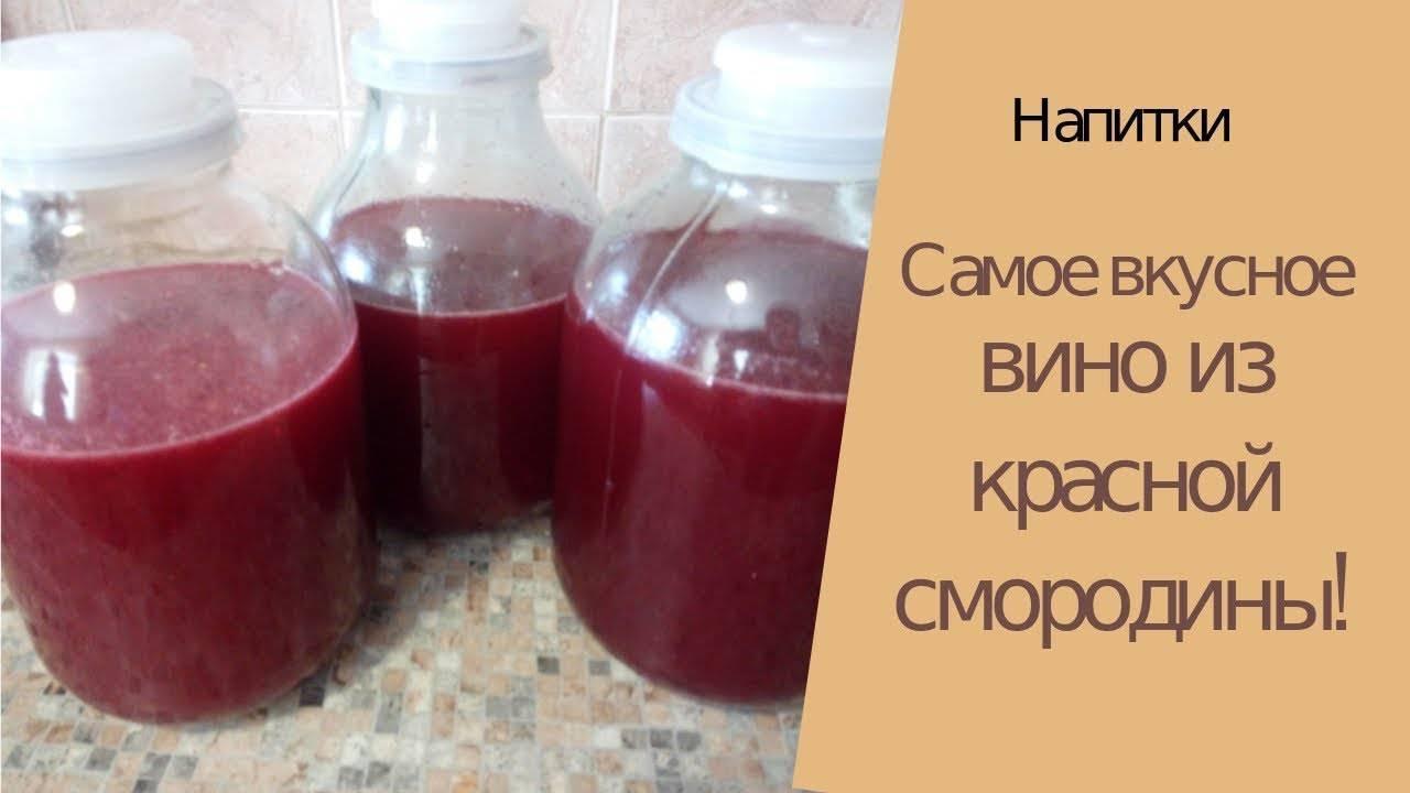 Ставим вино из красной смородины в домашних условиях