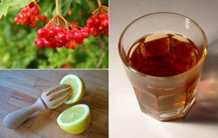 Домашнее вино из калины — рассмотрим вместе