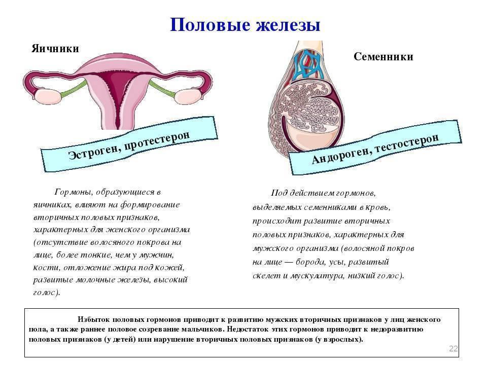 Женские гормоны в пиве: миф или реальность, содержится ли эстроген, как влияет на женский и мужской организм
