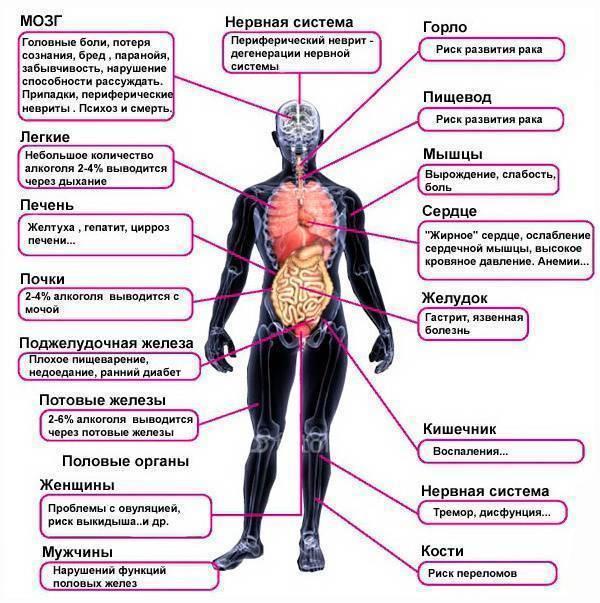 Время выведения алкоголя из организма у мужчин и женщин - расчет по объему, крепости напитка и веса человека