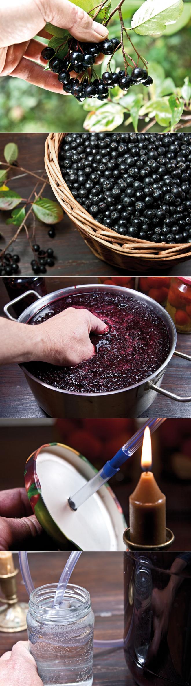 Рецепт вина из черноплодной рябины. как сделать в домашних условиях пошагово?