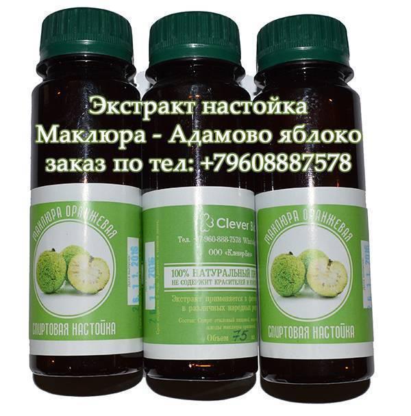 Маклюра (адамово яблоко): лечебные свойства, рецепты, противопоказания