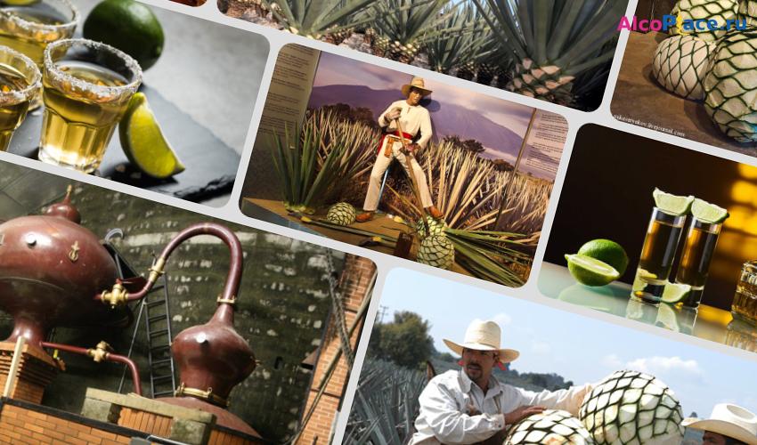 История и способы, как приготовить текилу в домашних условиях