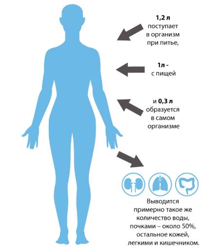 Как вывести лишнюю жидкость из организма. диета и народные средства