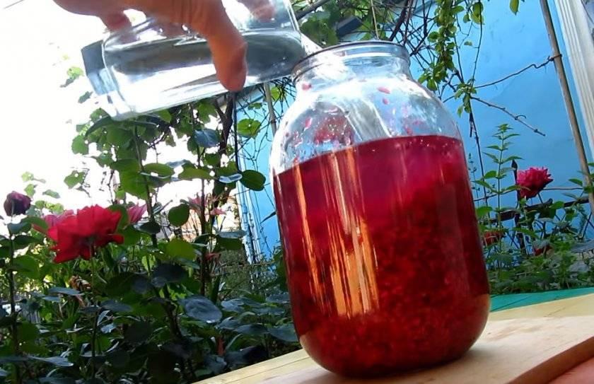 Настойка из малины на водке, самогоне, на спирту и коньяке