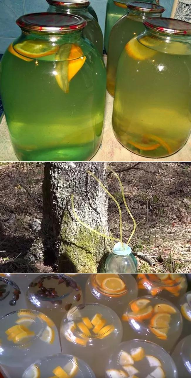 Вино из березового сокастаринный рецепт вина из березового сока, фото. делаем вино из сока, рецепт