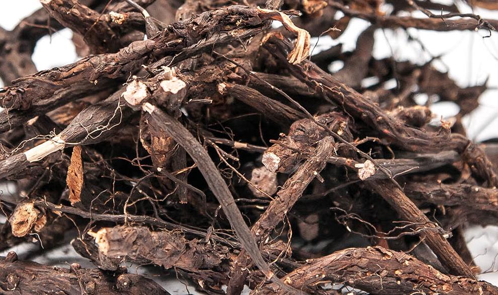 Настойка корня белой лапчатки – универсальное средство для лечения щитовидной железы