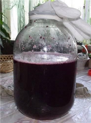 Что делать, если домашнее вино покрылось плесенью?