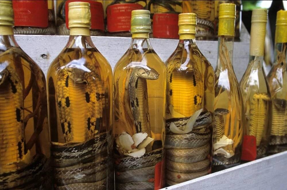 Водка со змеей: польза и вред, как изготавливается знаменитый напиток - я здоров