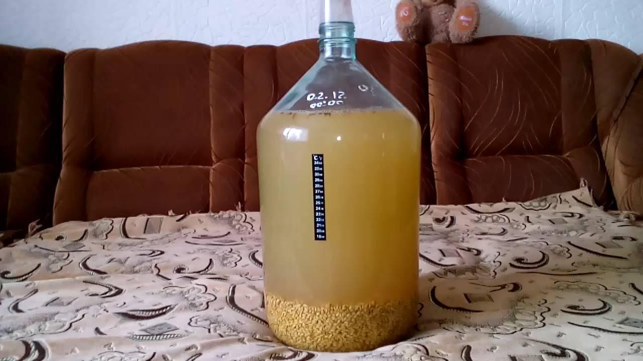 Как сделать брагу из пророщенной пшеницы в домашних условиях