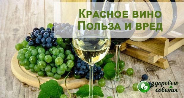 Польза и вред красного вина для организма человека