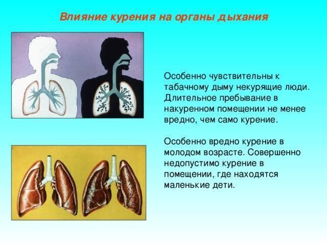 Влияние курения на органы дыхания человека | дружносельская психиатрическая больница - gkuz-dpb