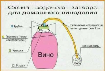 Как делать вино в домашних условиях: основные этапы, правила и рекомендации