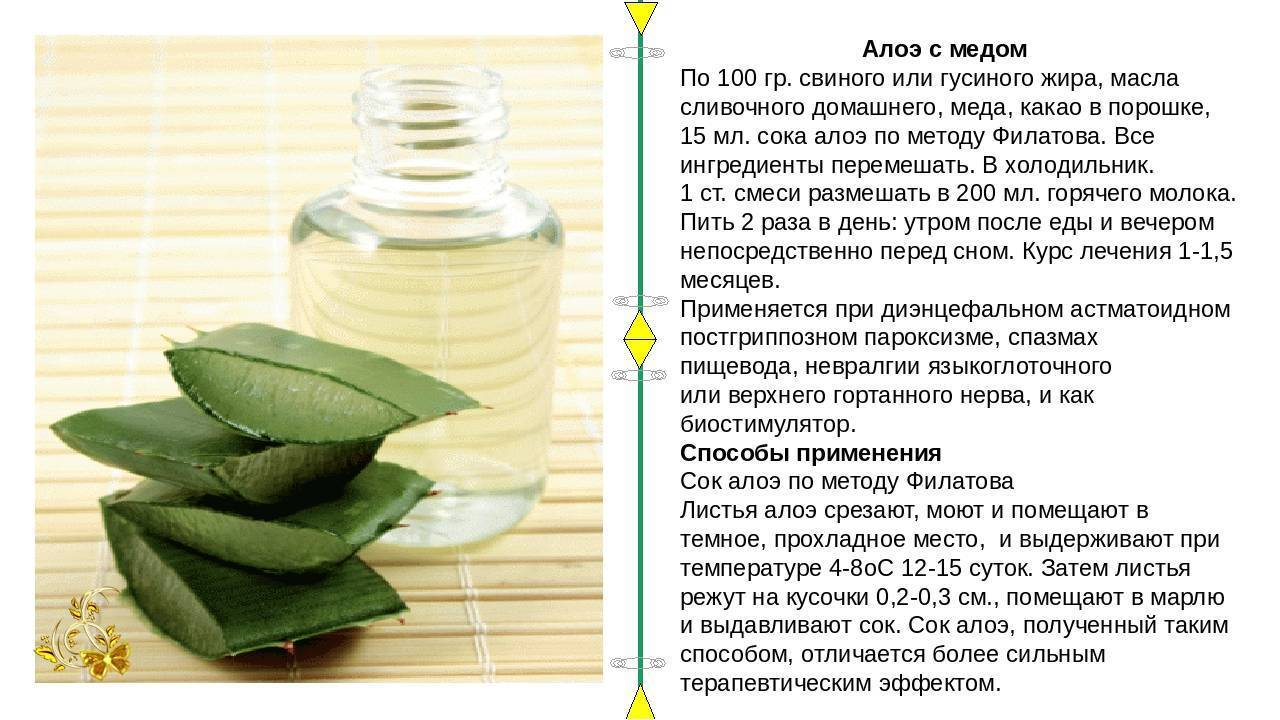 Рецепт настойки из алоэ с медом