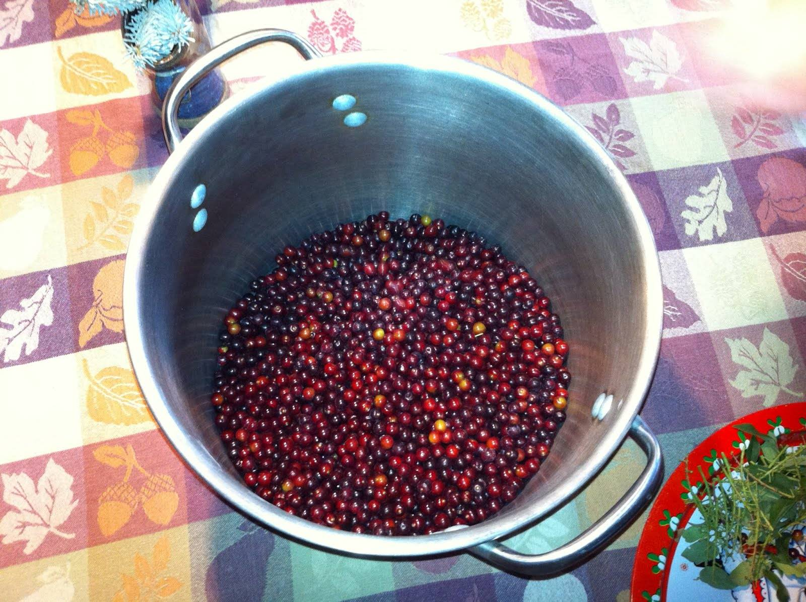 Вино из черноплодной рябины в домашних условиях: 7 простых пошаговых рецептов - rus-womens