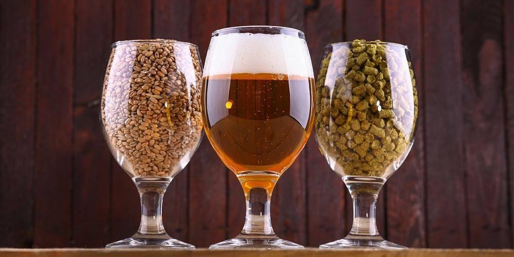 Рецепт приготовления пива из квасного сусла в домашних условиях