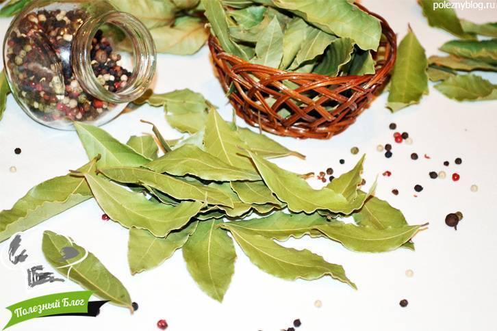 Настойка лаврового листа— применение, рецепты илечебные свойства