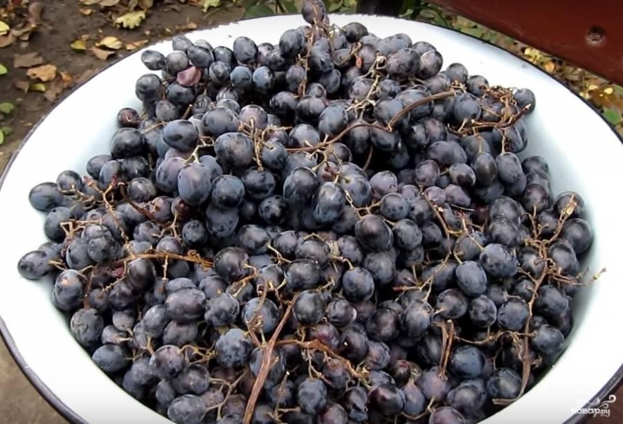Виноградный самогон – готовим дома!