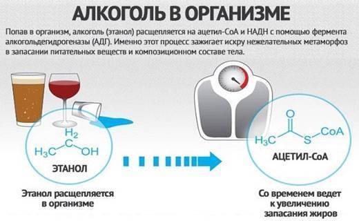 Алкоголь при диете: какой можно пить, какой выбрать