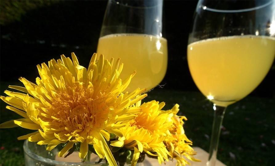 Вино из одуванчиков рецепт приготовления в домашних условиях: простой классический и с цитрусовыми. как сделать из цветков – технология и полезные советы
