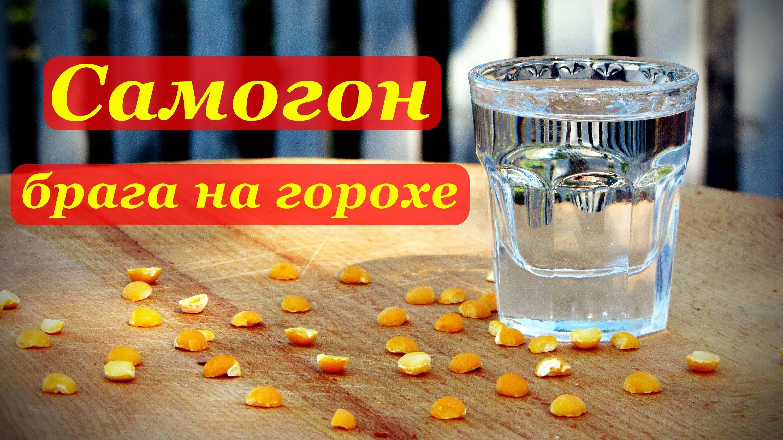 Рецепты гороховой браги, особенности приготовления самогона из гороха