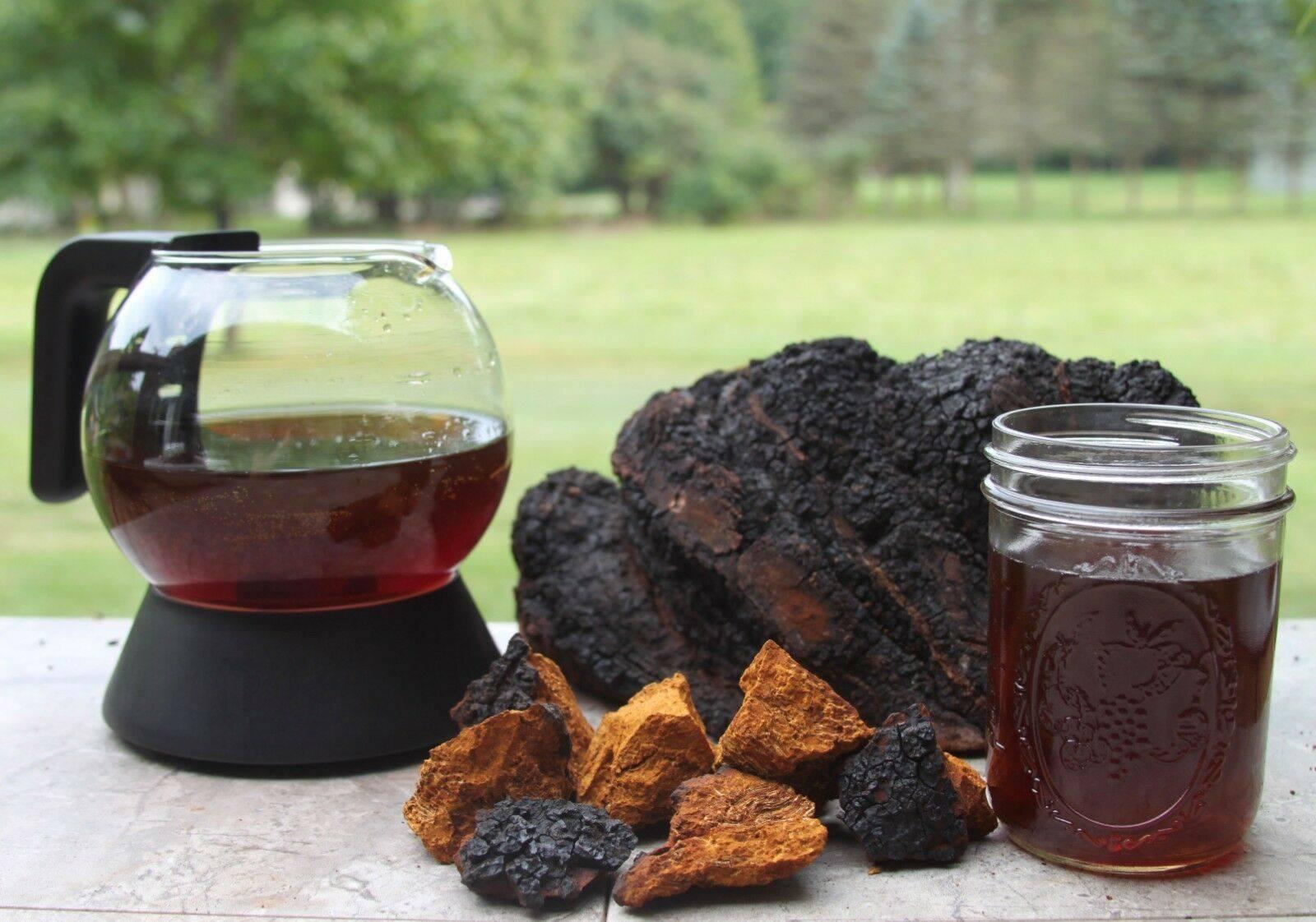 Чага (берёзовый гриб) – полезные свойства и применение чаги, как настаивать чагу? лечение чагой при онкологии, рецепты, настойка, противопоказания