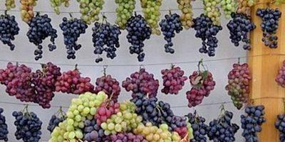Автохтонные сорта винограда: что это такое, какие из них считаются лучшими, описание и характеристики