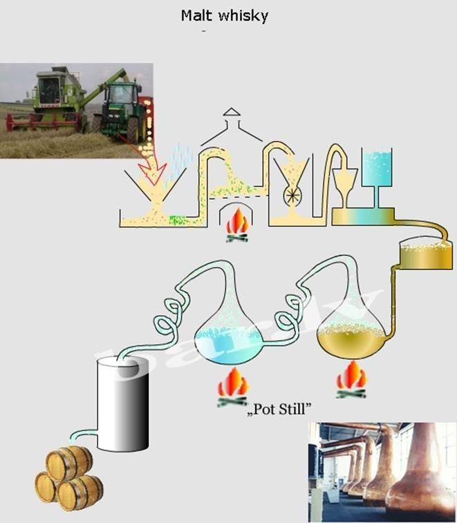 Из чего делают текилу: технология производства