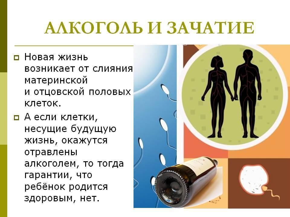 Питание для мужчины для зачатия ребенка