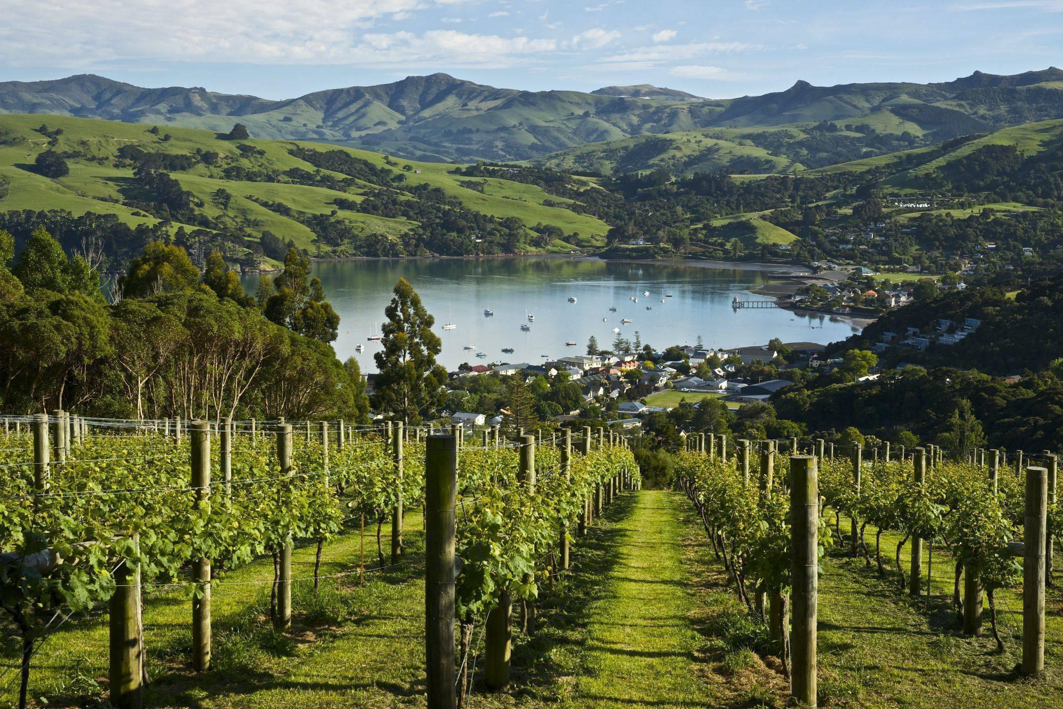 """Вино """"совиньон блан"""", новая зеландия: характеристика вкуса, обзор и отзывы"""