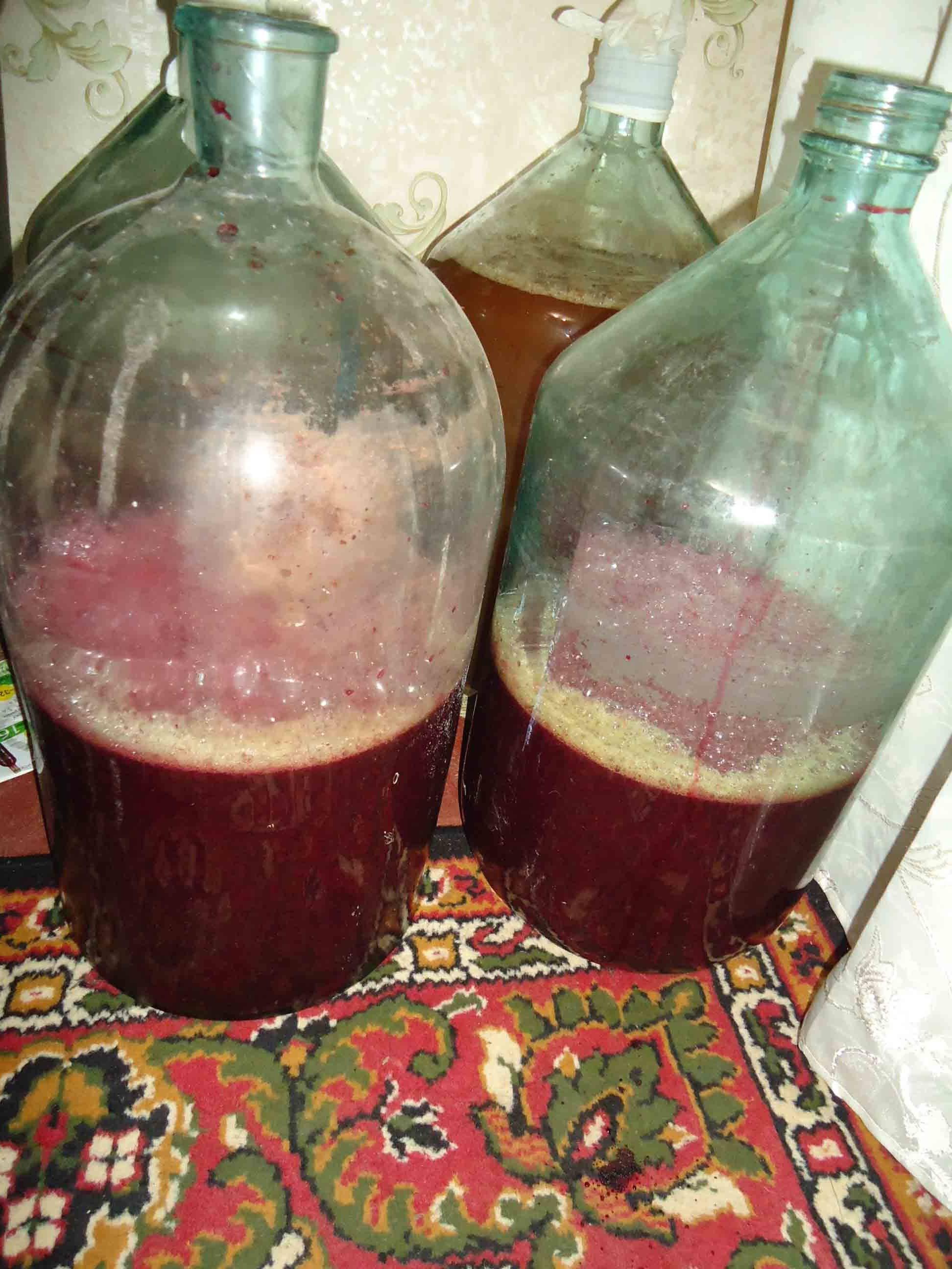 Рецепты приготовления вина, настоек и наливок из красной рябины в домашних условиях