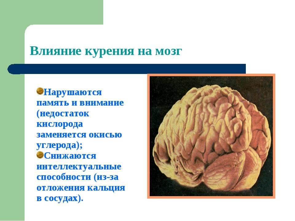 Как курение влияет на мозги: что происходит с сосудами головного мозга, какое влияние сигарет на интеллект и память, что будет, если бросить?