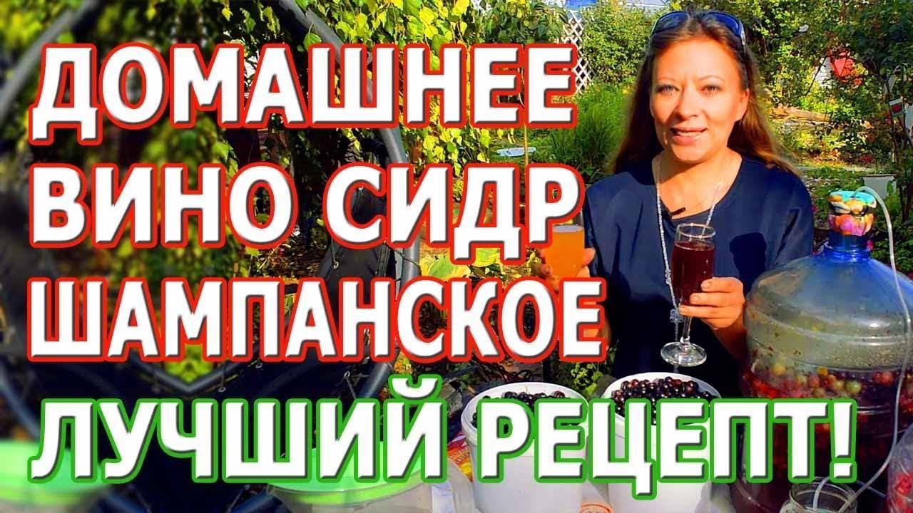 Шампанское в домашних условиях: как сделать по рецепту своими руками, видео