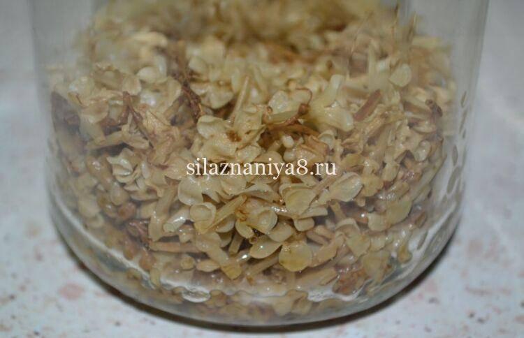 Настойка сирени на водке: применение (для суставов, при боли, от варикоза), отзывы