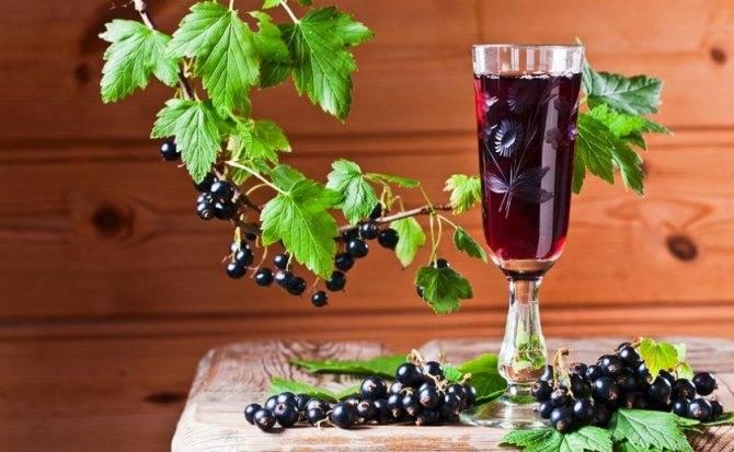Самодельное вино из смородины