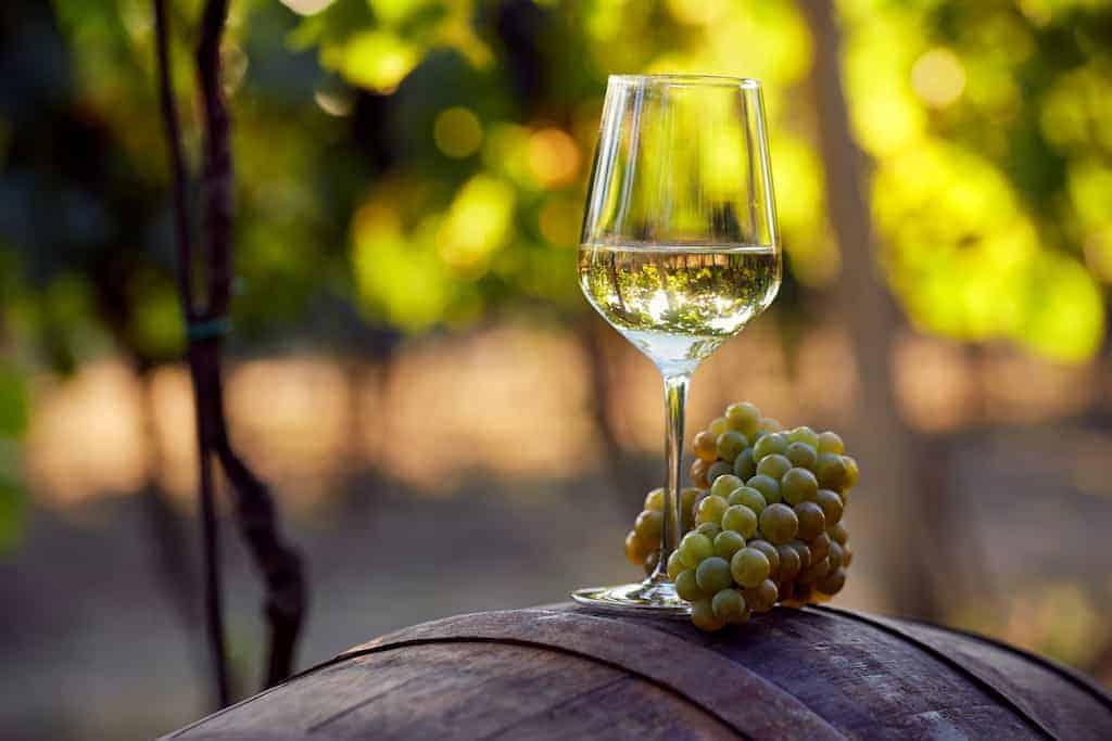 Шардоне вино — описание, особенности и культура употребления