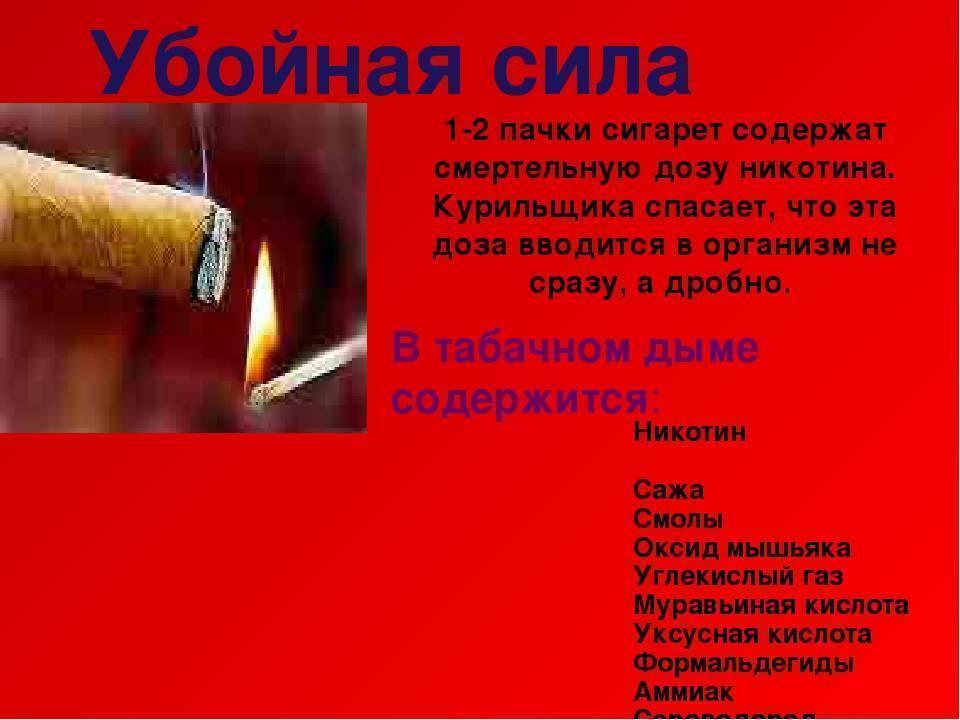Самые интересные факты о сигаретах: запреты, марки, рекорды