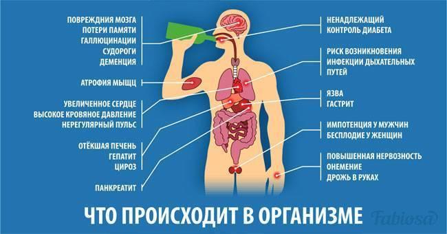 Сколько алкоголя вырабатывает организм человека в сутки?