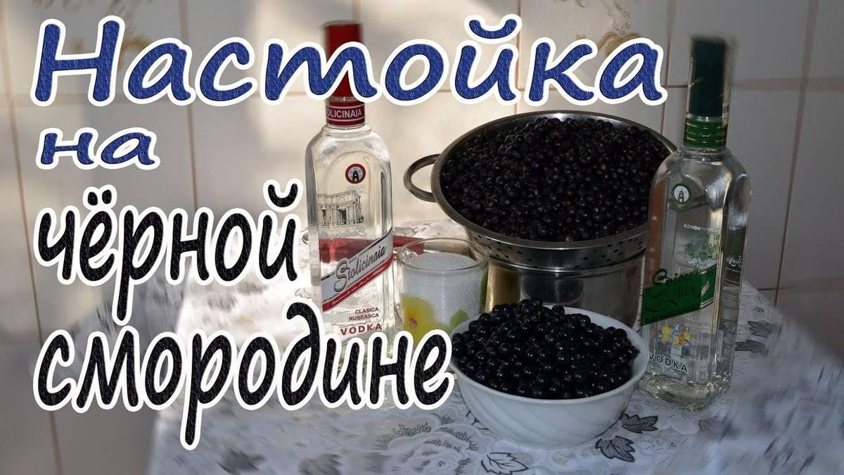 Как готовить настойку из смородины дома на спирту, водке, самогоне