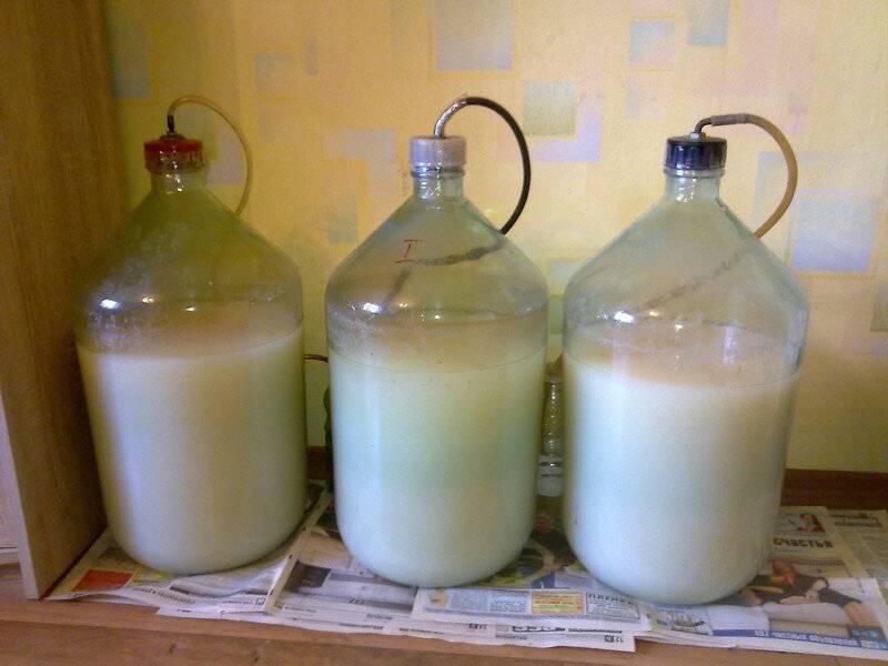 Как приготовить брагу из березового сока в домашних условиях