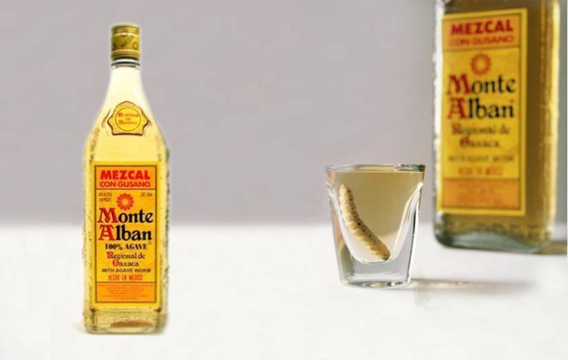 Мескаль – колоритный мексиканский напиток с гусеницей | алкофан | яндекс дзен