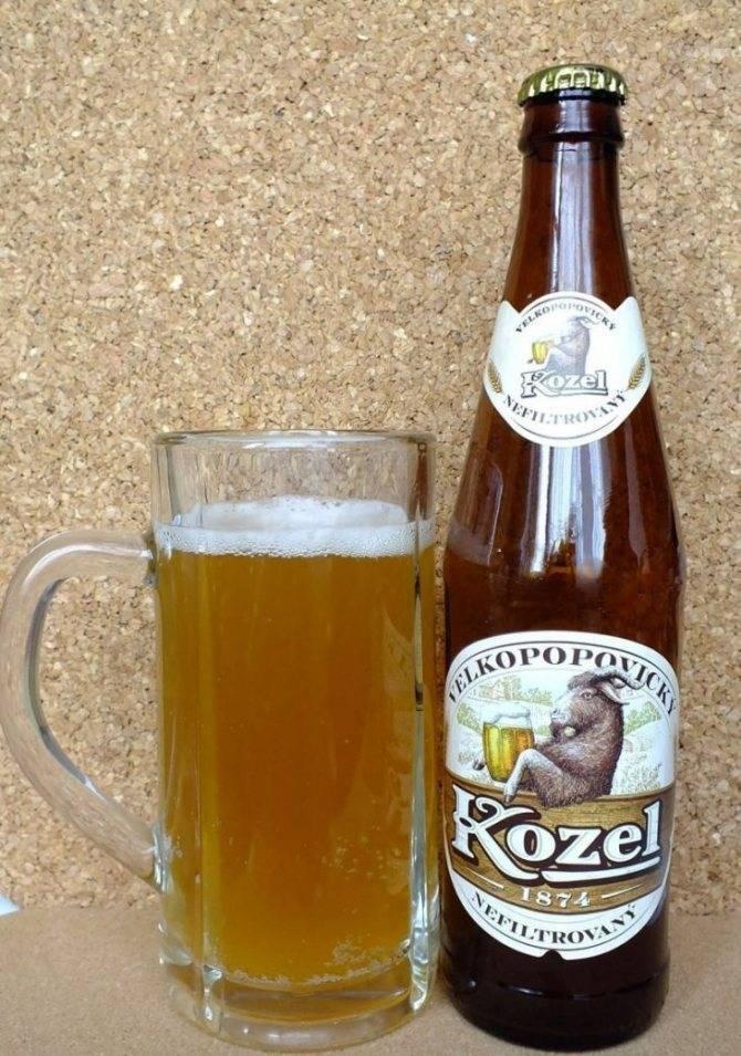 «велкопоповицкий козел»: история, производитель и отзывы о чешском пиве