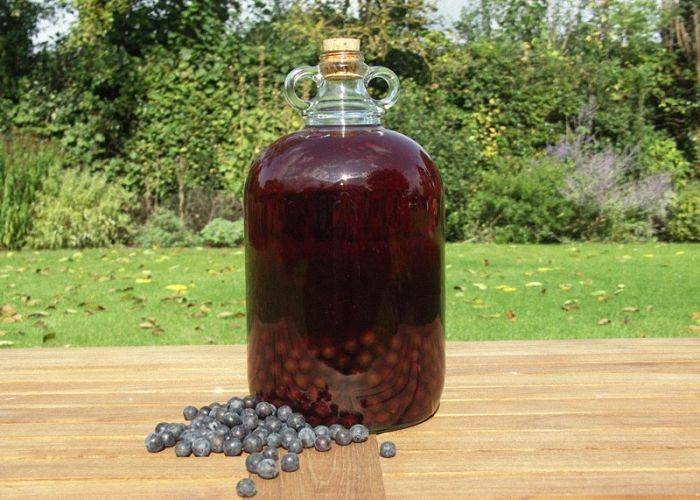 Вино из терносливы в домашних условиях