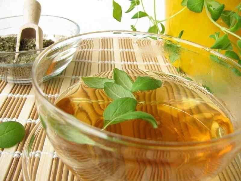 Как самостоятельно собрать и приготовить сбор трав от алкоголизма